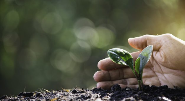 Hand protecting a green young plant with growing in the soil on